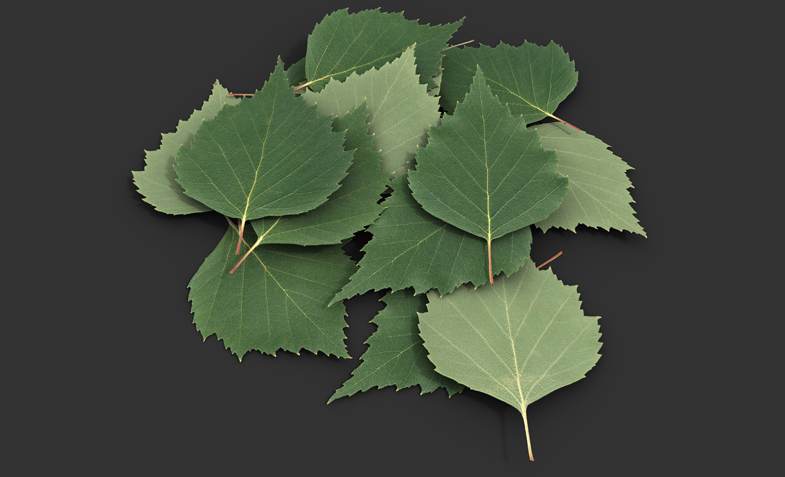 Leaf Texture 001 Birch Nordicfx I just finished up doing a project where a leaf textures was. http www nordicfx net portfolio leaf texture 001 birch