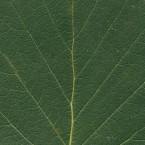 001 Leaf Textures